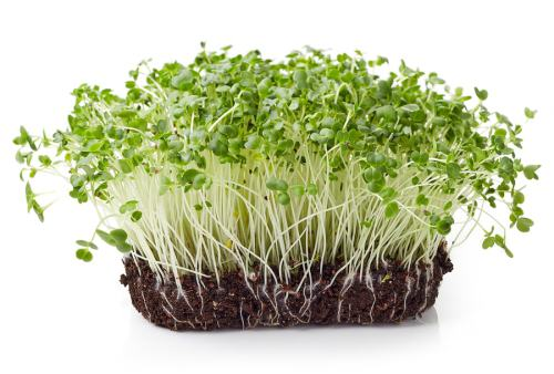 10 Benefits of Broccoli Sprouts - Elev8 Online Personal